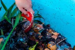 Abonamiento en un compartimiento plástico en casa usando los pedazos del gusano de una granja y de la cocina imágenes de archivo libres de regalías
