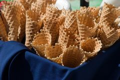 Abondance de cônes Photographie stock libre de droits