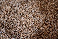 Abondance de grain avec le backround brouillé Image stock