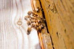 Abondance des abeilles à l'entrée de la ruche dans le rucher Photo stock