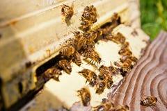Abondance des abeilles à l'entrée de la ruche dans le rucher Photos libres de droits