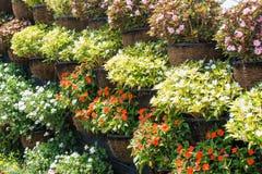 Abondance des fleurs dans des pots de fleur se tenant dans les lignes Photographie stock libre de droits