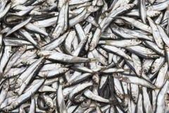Abondance du poisson frais sur l'affichage du marché Photo stock