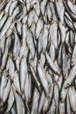 Abondance du poisson frais sur l'affichage du marché Photo libre de droits