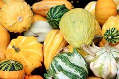 Abondance végétale Images stock
