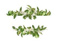 Abone la frontera del marco con cal de la plantilla con agrios y flores en stock de ilustración