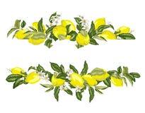 Abone la frontera del marco con cal de la plantilla con agrios y flores en libre illustration