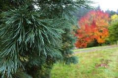Aboretum το φθινόπωρο Στοκ εικόνες με δικαίωμα ελεύθερης χρήσης