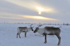 Aborigen ártico ruso fotografía de archivo
