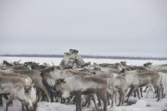 Aborigeno artico russo Fotografie Stock