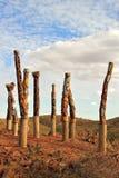 Aboriginal poles Royalty Free Stock Image
