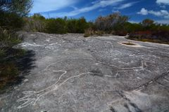 Aboriginal rock engraving. Ku-ring-gai Chase National Park. New South Wales. Australia. The Ku-ring-gai Chase National Park is a protected national park that is royalty free stock photos