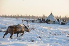 Aboriginals nordici La Russia Yamal Nadym Immagine Stock Libera da Diritti