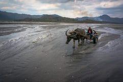 Aboriginer i rida för berg Fotografering för Bildbyråer