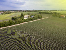 Above agricultural fields. Late afternoon above agricultural crops and fields, plain of Vojvodina, northern Serbian province Royalty Free Stock Photos