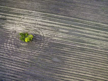 Above agricultural fields Stock Image