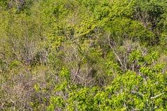 Above arid bush Stock Photography