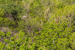 Above arid bush Royalty Free Stock Photo