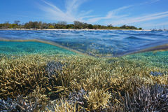 Above below water coral reef island New Caledonia Stock Photography