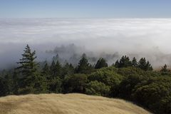 Above the clouds on Mt Tamalpais royalty free stock image