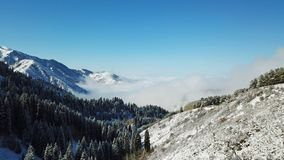 Above the clouds in the snowy mountains. Growing green spruce. Ate covered with snow. Clouds below us. Shooting with the drone. Blue skies. The snowy tops of stock photography