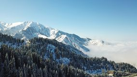 Above the clouds in the snowy mountains. Growing green spruce. Ate covered with snow. Clouds below us. Shooting with the drone. Blue skies. The snowy tops of stock photo