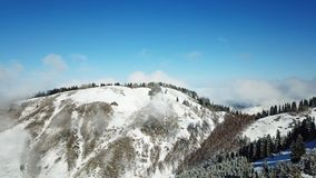 Above the clouds in the snowy mountains. Growing green spruce. Ate covered with snow. Clouds below us. Shooting with the drone. Blue skies. The snowy tops of royalty free stock photos