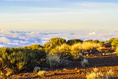 Above the clouds. Volcanic island - mountain, bushes and bright sky Stock Photography