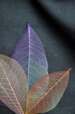Above of Colorful Skeleton Leaves Royalty Free Stock Photo