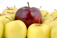 Above the Crowd. A large red apple surrounded by yellow apples (12MP camera Stock Photo