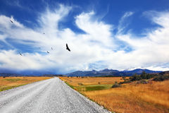 Above the dirt road Andean condor soars Stock Image
