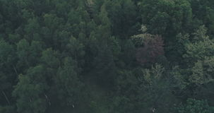 Above forest trees. Slow spinning movement video above forest trees cinematic stock video