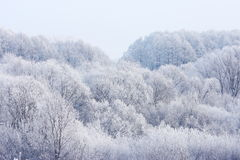 Above frosty winter forest Royalty Free Stock Image