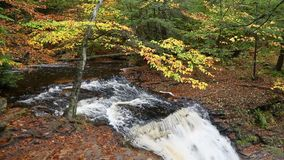 Above Ganoga Falls in Autumn Loop – Ricketts Glen Pennsylvania. The top of Ganoga Falls, a beautiful waterfall in Pennsylvania`s Ricketts Glen State Park, is stock video
