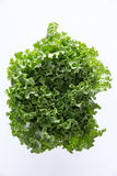 Above Head Shot of Newly Harvested Curly Leafy Lettuce Stock Photos
