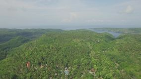Above Island Palm Trees Aerial 4k. Aerial footage of a forest full of palm trees in Nusa Penida, Bali, Indonesia stock video