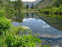 Above Maroon Bells Reflection. A beautiful pond above Maroon Lake reflects the greenery in Aspen, Colorado Stock Photo
