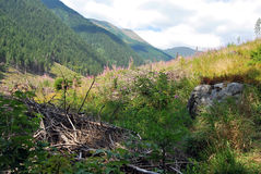 Above Rackova dolina Royalty Free Stock Images