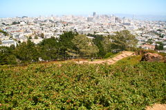 Above San Francisco. The San Francisco skyline from the hillside Stock Photo