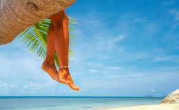 Above the sea. View of nice smooth woman's legs hanging from the palm stock images