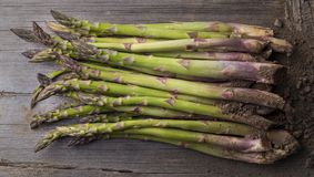 Fresh raw asparagus from above on wooden table. From above shot of fresh green asparagus on wooden table with heap of soil Stock Photos