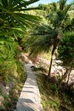 Paved pathway on green tropical slope. From above shot of paved narrow steps running down among green palms to beach royalty free stock photo