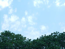 Above the tree top. Shows a tree top with blue sky as background, space for text Royalty Free Stock Image