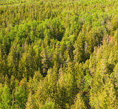 Above tree tops. Birds-eye view at a boreal forest lit by warm afternoon sun Stock Photo