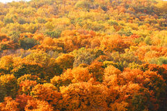 Above the trees. Tops of the autumnal trees Royalty Free Stock Photography