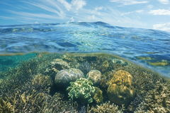 Above and underwater coral reef and sky with cloud Stock Photo