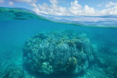 Above and underwater massive coral and cloudy sky Stock Photography