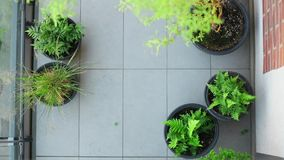 Above view at balcony with plants. In loft building stock footage