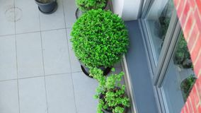 Above view at balcony with plants. In loft building stock video footage