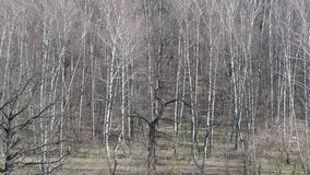 Above view of bare oak and birch trees in forest in spring. Above view of bare oak and birch trees in forest of city park in sunny spring day stock video